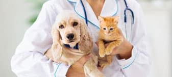 Best Pet Insurance Plans/Policies